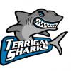 Terrigal Sharks